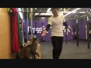 Котик, который очень любит спорт