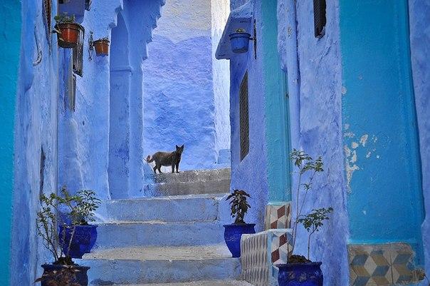 На этих кадрах нет ни капли фотошопа. Все дома в городе Шефшауэн в Марокко действительно синие. И это просто сказочно красиво: ↪