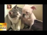 Самые смешные приколы с кошками и собаками 2014 The funniest jokes with cats and dogs in 2014