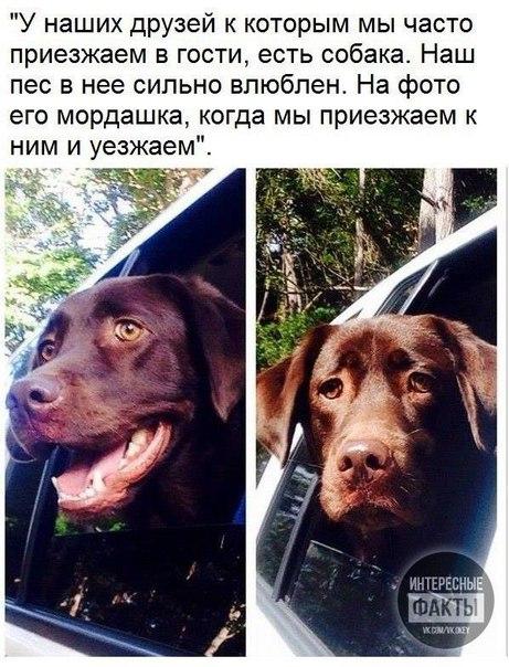 Фото №456243925 со страницы Заюньки Косенковой