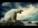 Лучшие видео youtube на сайте main-host Полярный медведь. Суперхищники. 2 Nat Geo Wild
