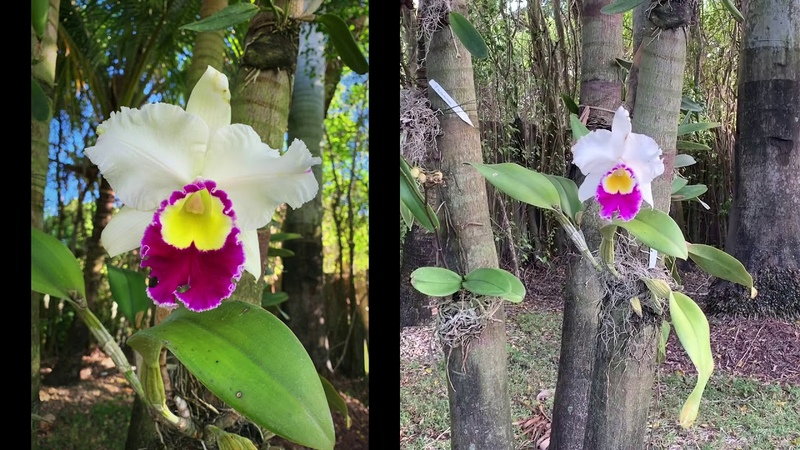 February 2019 Orchid Update, New Blooms, Garden Tour