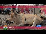 Орел и Решка: Ченнаи. Индия
