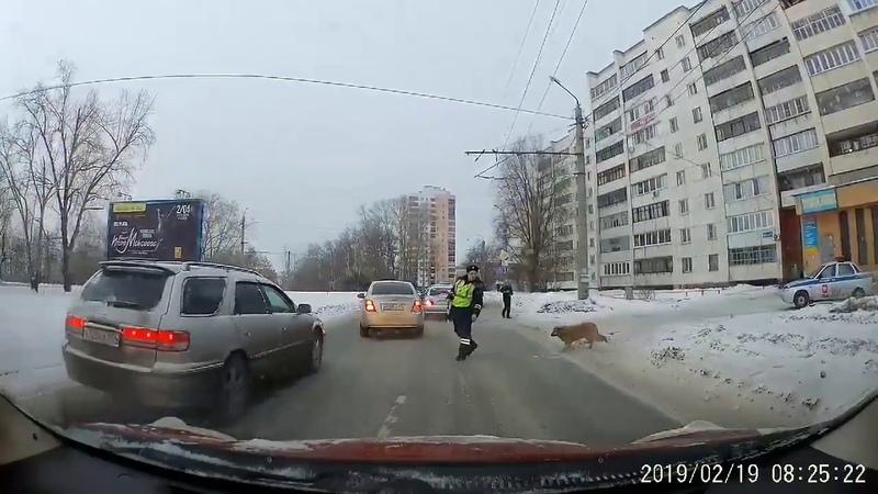 Полицейский перевел собаку через дорогу, Белый снег в Красноярске, Абдулов госпитализирован