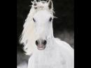 Александр Малинин. Белый конь