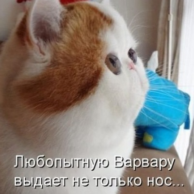Надежда Чумакова, 30 сентября , Новосибирск, id148860530
