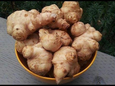 Топинамбур как корм для кроликов.