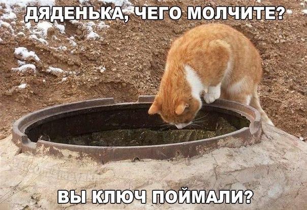https://pp.vk.me/c615826/v615826457/fc54/qfEa-ovzBHI.jpg