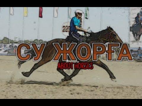 АЯҚТАРЫНЫҢ ЖЫЛДАМДЫҒЫНАН КӨЗІҢ ШАТЫСАДЫ - СУ ЖОРҒА   About Horses