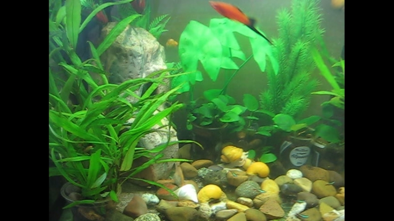 Мой аквариум 108 лит