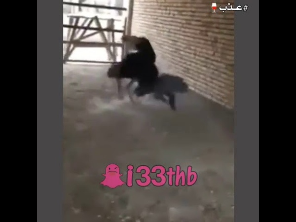 Драка со страусом.