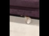 Был кот и нет кота