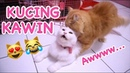 BEGINI CARA NGAWININ KUCING - CHERRY SI KUCING DOYAN KAWIN [ VIDEO KUCING LUCU ]