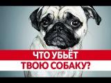Что НЕЛЬЗЯ СОБАКАМ Продукты вредные для собак! Вреден ли шоколад для собак