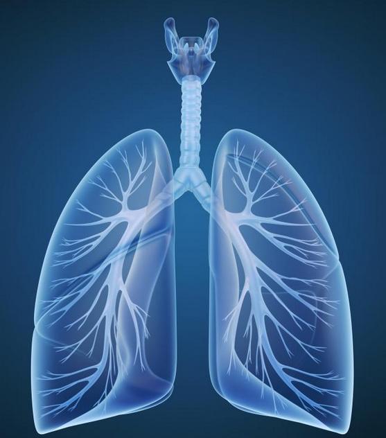 что такое дыхание жидкостью