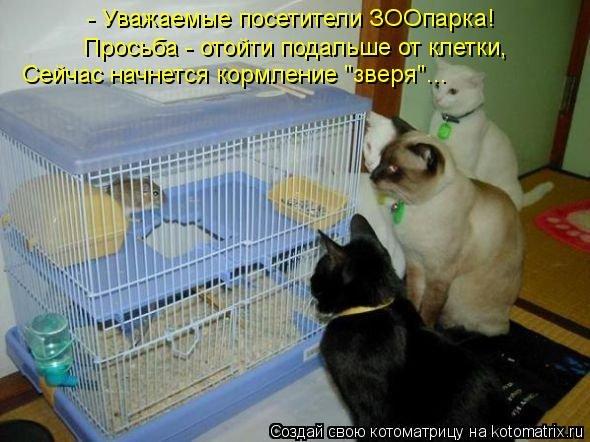 http://cs411523.vk.me/v411523175/3d47/0Hh6eYlH998.jpg