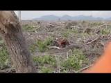 Последствия вырубки джунглей для производства пальмового масла