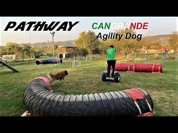PathWay ES6 S Off Road 2400W in attività di Agility Dog www.personaltransporter.it