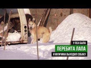 Русский Хатико