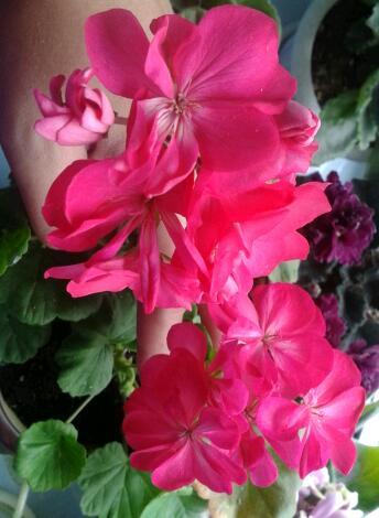 Цветы у Ликки UOEU7JAu0wY