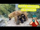 Мама этих щенков потерялась, и они чуть не умерли от голода!