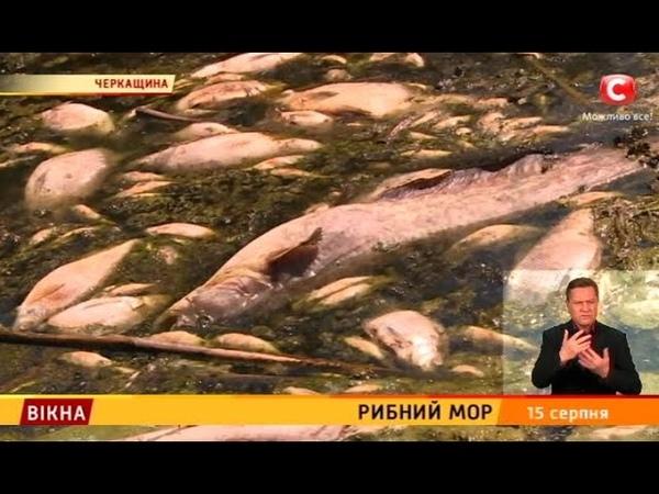 Рибний мор – Вікна-новини – 15.08.2018