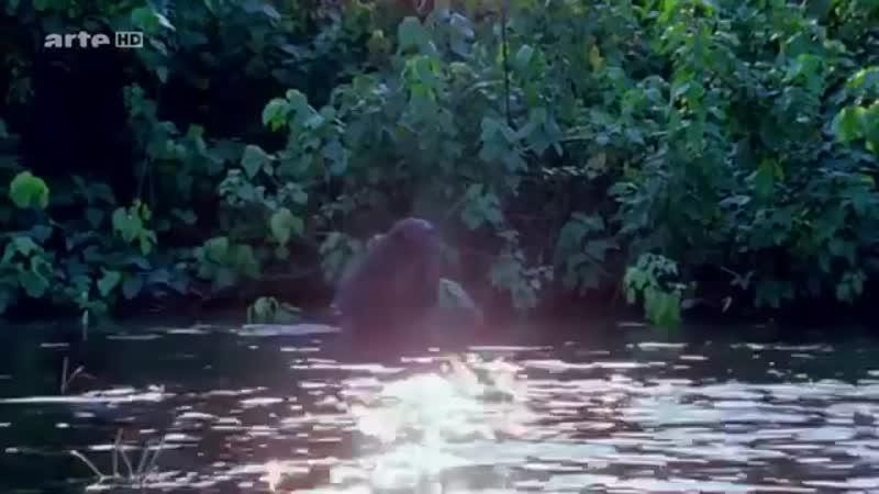 MonsterQuest Folge Der Wahre Hobbit Reportage auf History Channel