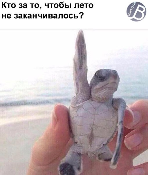Фото №456247417 со страницы Кирилла Фролова