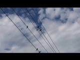 Jennie Moz-Art - The Birds