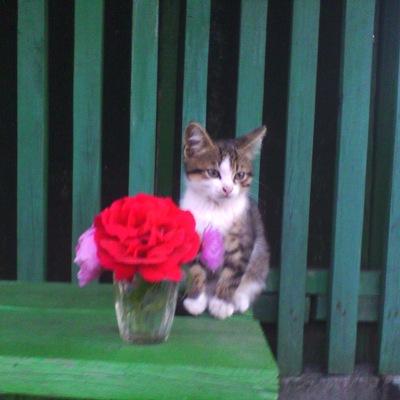 Карина Панарина, 24 июня 1994, Челябинск, id215309790