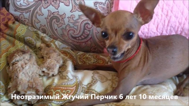 Неотразимый Жгучий Перчик 6 лет 10 месяцев