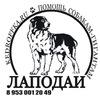 ЛАПОДАИ, передержка собак-Гигантов