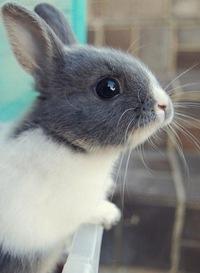 Кролики на аву фото