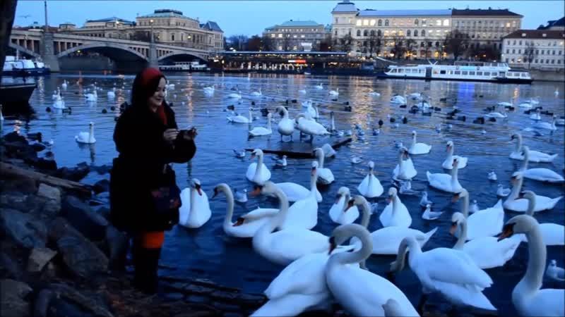 Как я кормила лебедей и нутрию! 😜 Прага 🇨🇿