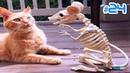 КОТЫ 2019 Смешные кошки Приколы с котами до слёз - Лучшие приколы с котами и кошками