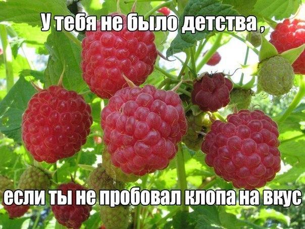 http://cs635104.vk.me/v635104145/3cb2/BPLEdnsjerY.jpg
