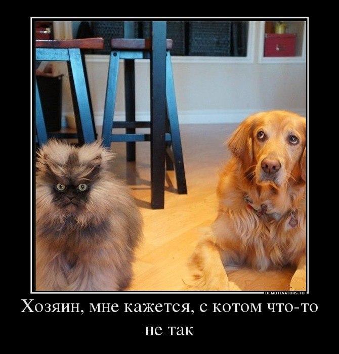 Котята мейн-кун в дар москва обоих