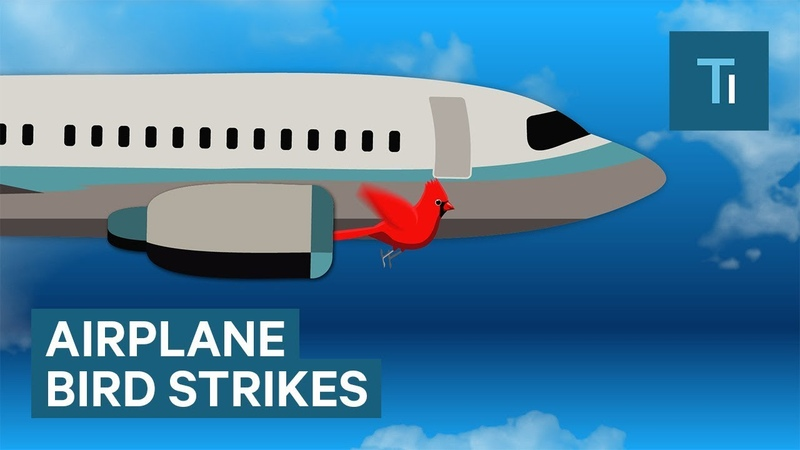 What Happens When A Bird Flies Into A Plane Engine
