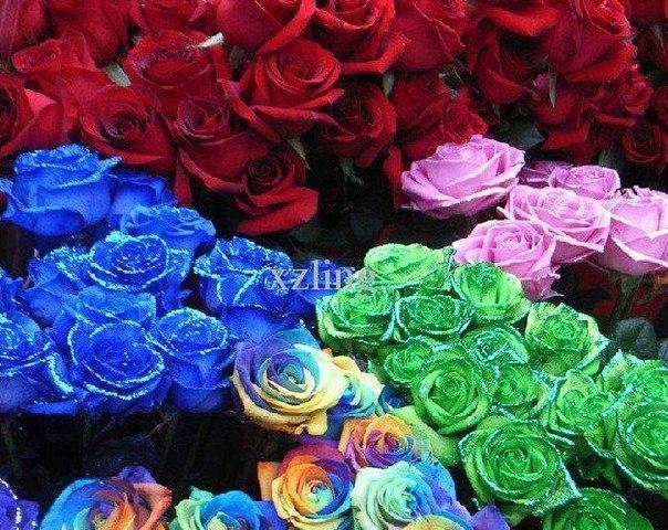 новые фото цветов: