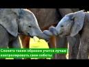 Сделано фото слоников перекрутивших хоботы друг с другом