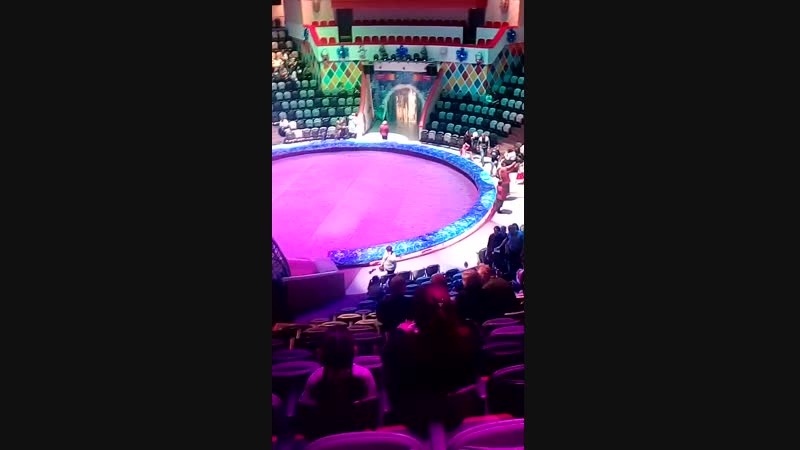 цирк 6 янв 2019