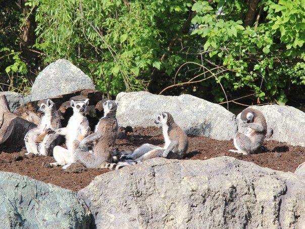 Zoo93 ru - Краснодарский зоопарк