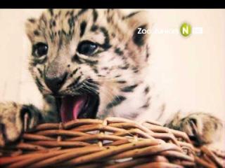 Новорожденные в зоопарке на Viasat Nature HD