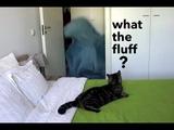 Реакция кота на магическое исчезновение хозяйки Cat's reaction to what the fluff challenge