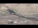 ха-ха-ха хит -анжела-пишет ПРОРОК САН БОЙ когда собака ждала кошку на дереве.а ворона наблюдала