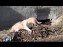котята беспризорники