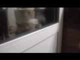 Открой мне, говорящий кот)