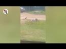 [Новости Шеремета Девять с половиной] Коля! Ты обязан это видеть! Real video