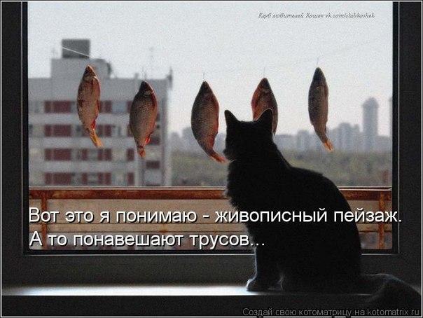 http://cs317621.vk.me/v317621743/4797/W5wdquj0o54.jpg