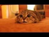 Кот, котик, смешно, мило, милота, уруру, ахаха :)
